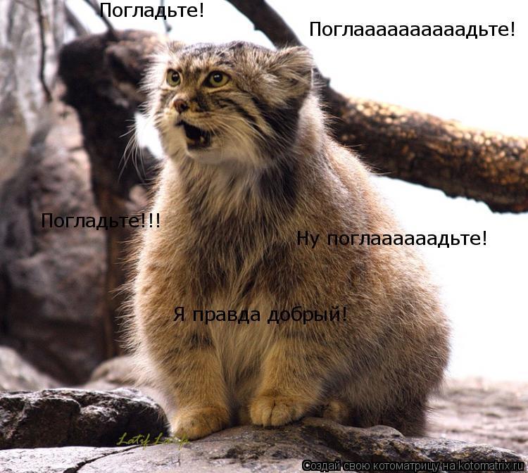 Котоматрица: Поглаааааааааадьте! Погладьте! Ну поглаааааадьте! Погладьте!!! Я правда добрый!