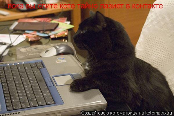 Котоматрица: пока вы спите коте тайно лазиет в контакте