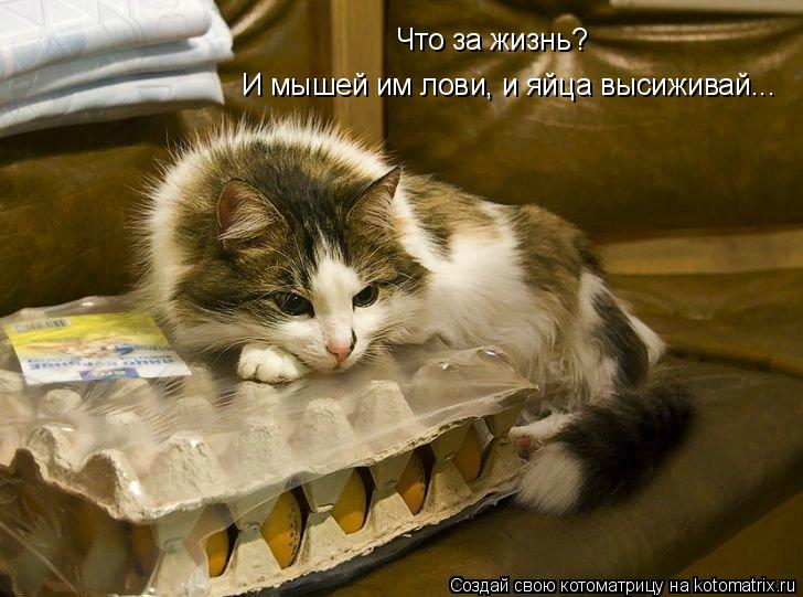 http://kotomatrix.ru/images/lolz/2010/11/02/725311.jpg