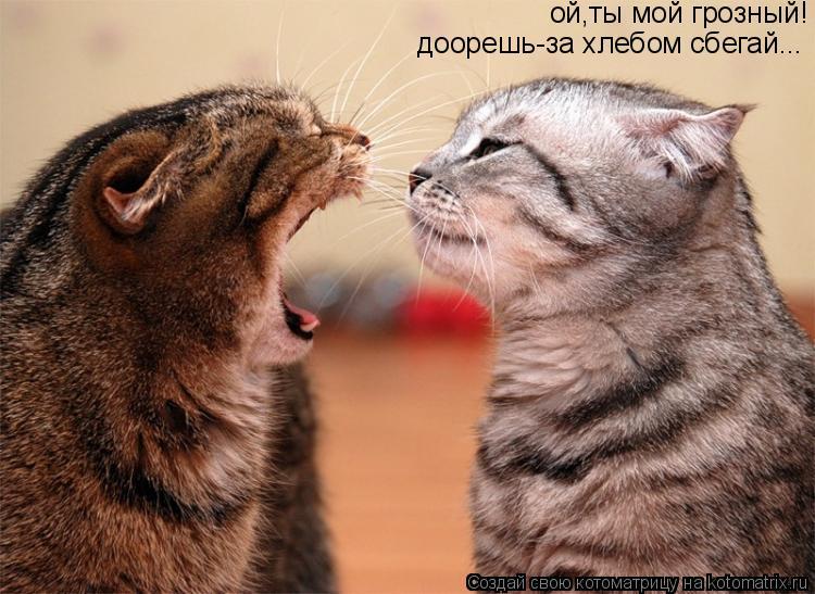 Котоматрица: ой,ты мой грозный! доорешь-за хлебом сбегай...