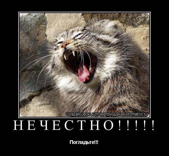 Котоматрица: Нечестно!!!!! Погладьте!!!