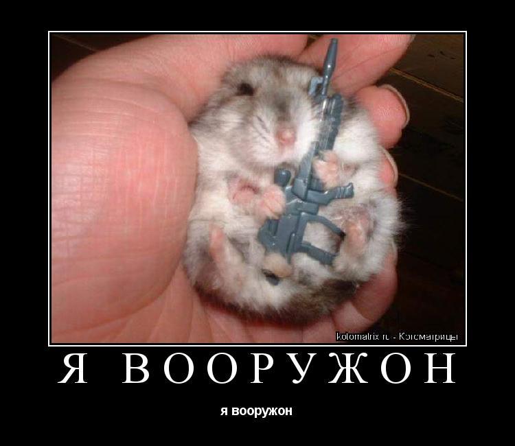 Котоматрица: я вооружон я вооружон
