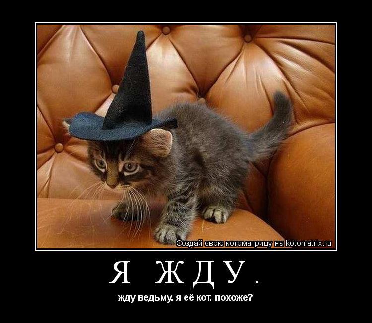 Котоматрица: я жду. жду ведьму. я её кот. похоже?