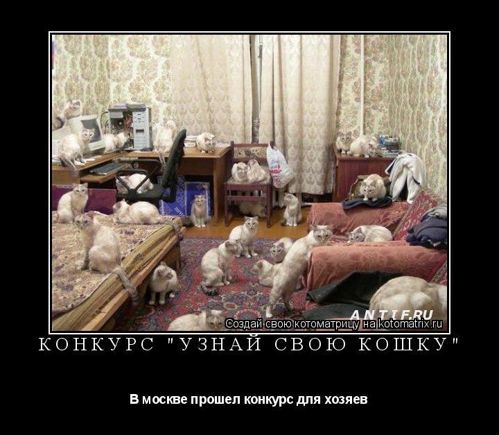 """Котоматрица: Конкурс """"Узнай свою кошку"""" В москве прошел конкурс для хозяев"""