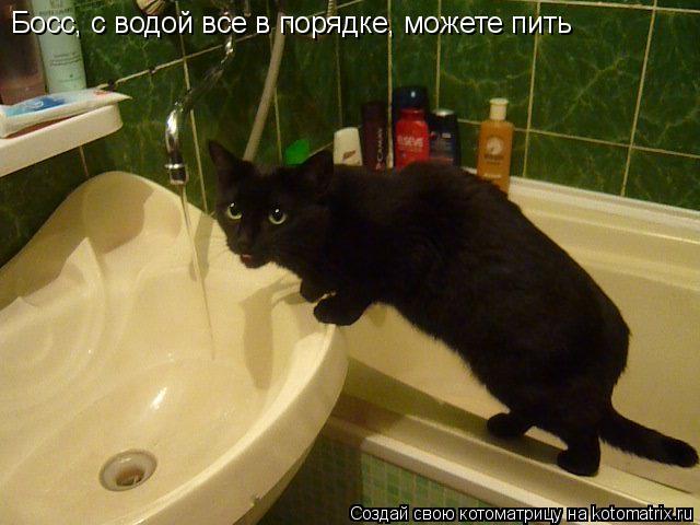 Котоматрица: Босс, с водой все в порядке, можете пить