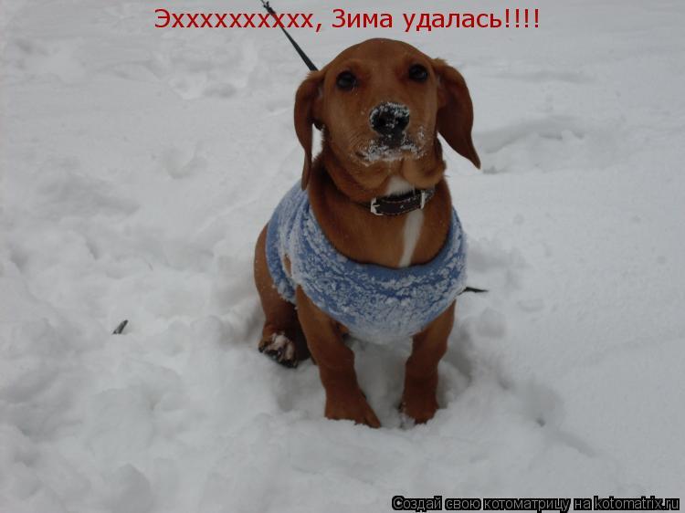 Котоматрица: Эхххххххххх, Зима удалась!!!!
