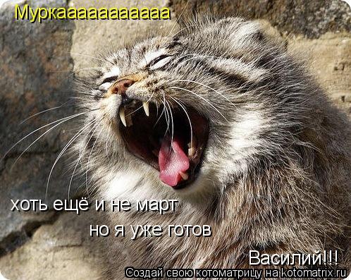 Котоматрица: Муркааааааааааа хоть ещё и не март но я уже готов Василий!!!