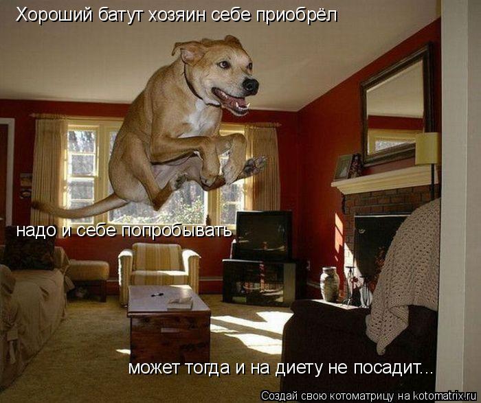 Котоматрица: Хороший батут хозяин себе приобрёл надо и себе попробывать может тогда и на диету не посадит...