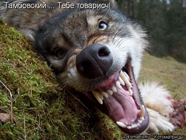 Котоматрица: Тамбовский ... Тебе товарисч!