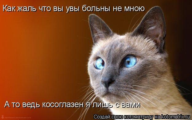 Котоматрица: А то ведь косоглазен я лишь с вами Как жаль что вы увы больны не мною