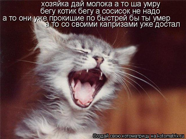 Котоматрица: хозяйка дай молока а то ша умру бегу котик бегу а сосисок не надо а то они уже прокишие по быстрей бы ты умер а то со своими капризами уже дос