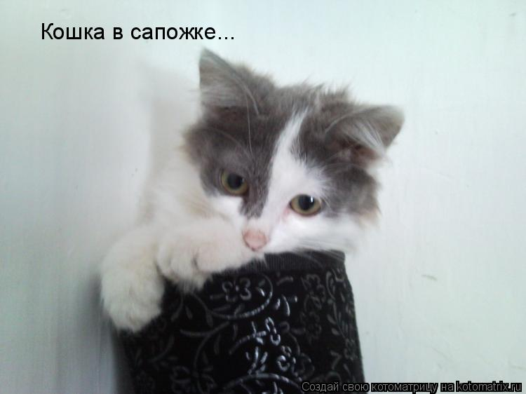 Котоматрица: Кошка в сапожке...