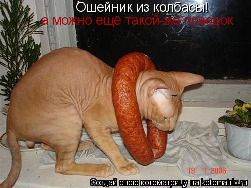 Котоматрица: Ошейник из колбасы! а можно ещё такой-же поводок