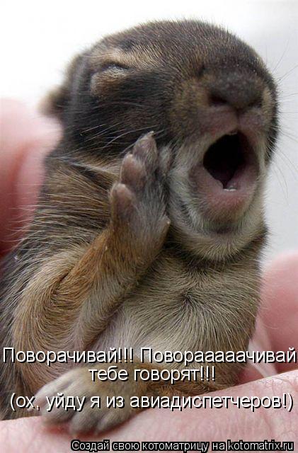 Котоматрица: Поворачивай!!! Поворааааачивай, тебе говорят!!! (ох, уйду я из авиадиспетчеров!)  тебе говорят!!!   (ох, уйду я из авиадиспетчеров!) ,