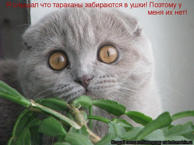 Котоматрица: Я слышал что тараканы забираются в ушки! Поэтому у меня их нет!