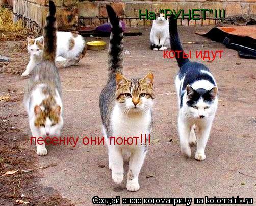 """Котоматрица: коты идут песенку они поют!!! На """"РУНЕТ""""!!!"""