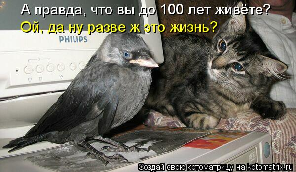 Котоматрица - А правда, что вы до 100 лет живёте?  Ой, да ну разве ж это жизнь?