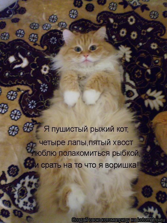 Котоматрица: Я пушистый рыжий кот, четыре лапы,пятый хвост люблю полакомиться рыбкой, и срать на то что я воришка! и срать на то что я воришка!