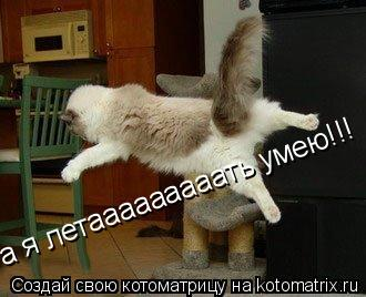 Котоматрица: а я летааааааааать умею!!!