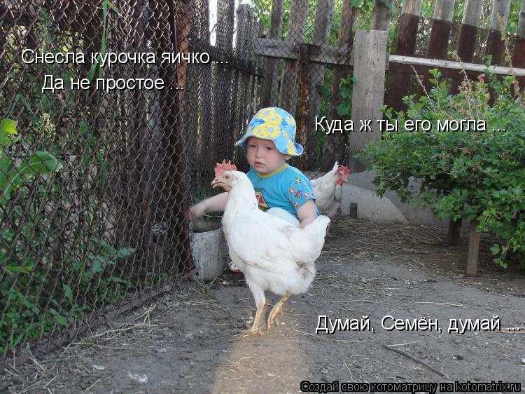 Котоматрица: Снесла курочка яичко ...  Да не простое ...  Думай, Семён, думай ... Куда ж ты его могла ...