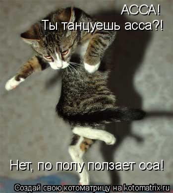 Котоматрица: АССА! Ты танцуешь асса?! Нет, по полу ползает оса!