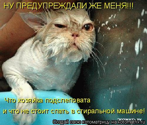 Котоматрица: HУ ПРЕДУПРЕЖДАЛИ ЖЕ МЕНЯ!!! Что хозяйка подслеповата   и что не стоит спать в стиральной машине!