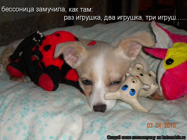 Котоматрица: бессоница замучила, как там: раз игрушка, два игрушка, три игруш.............