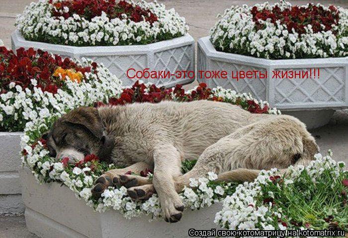 Котоматрица: Собаки-это тоже цветы жизни!!!