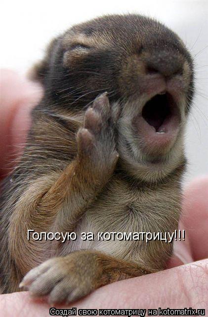 Котоматрица: Голосую за котоматрицу!!!