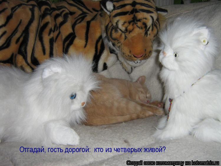 Котоматрица: Отгадай, гость дорогой:  кто из четверых живой?