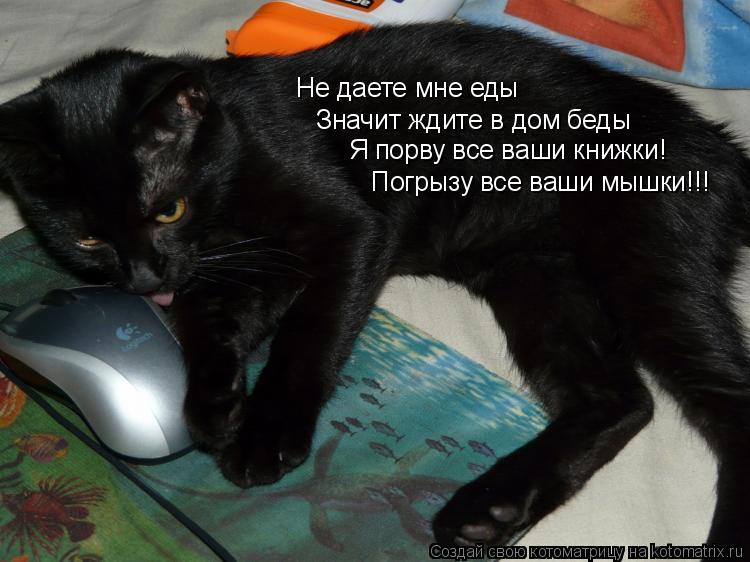 Котоматрица: Не даете мне еды Значит ждите в дом беды Я порву все ваши книжки! Погрызу все ваши мышки!!!
