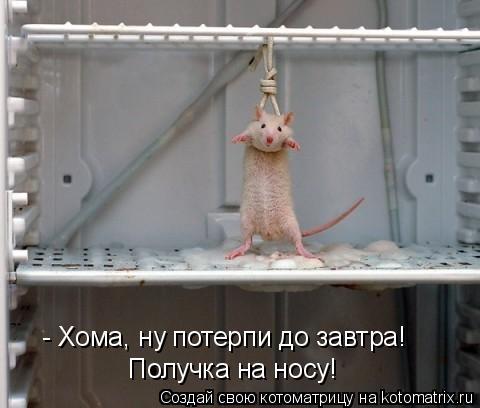 http://kotomatrix.ru/images/lolz/2010/11/03/725950.jpg