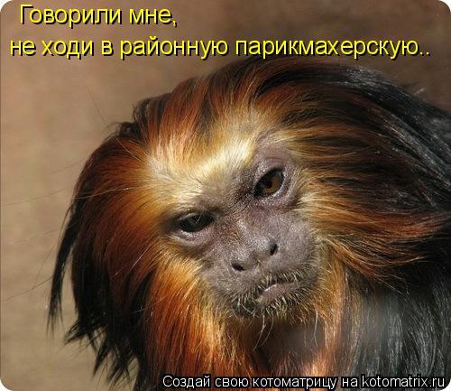 Котоматрица: Говорили мне,  не ходи в районную парикмахерскую..