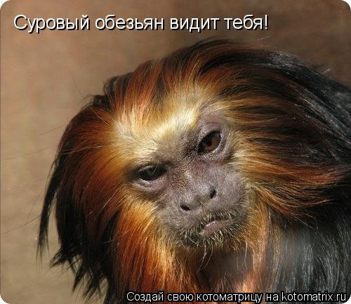 Котоматрица: Суровый обезьян видит тебя!
