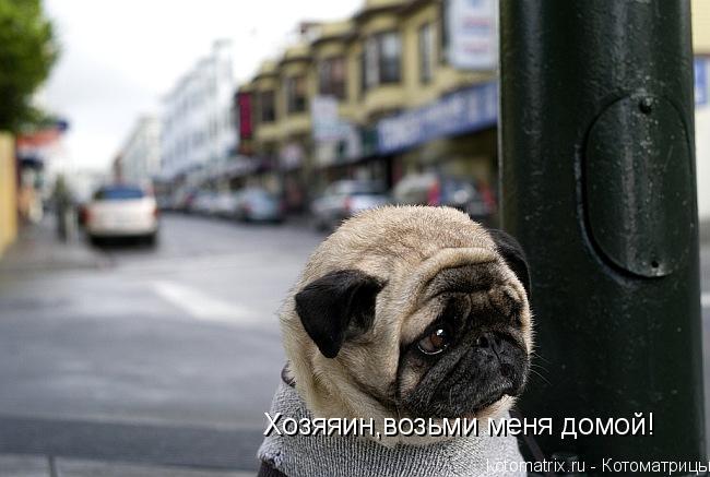 Котоматрица: Хозяяин,возьми меня домой!