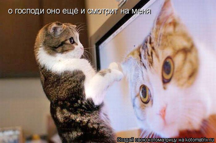 Котоматрица: о господи оно ещё и смотрит на меня
