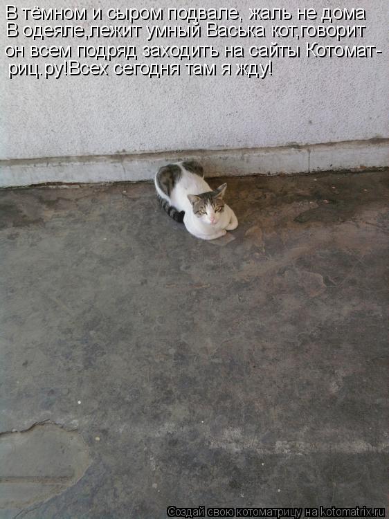 Котоматрица: В тёмном и сыром подвале, жаль не дома В одеяле,лежит умный Васька кот,говорит он всем подряд заходить на сайты Котомат- риц.ру!Всех сегодня