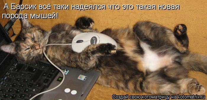 Котоматрица: А Барсик всё таки надеялся что это такая новая порода мышей!