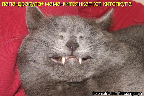 Котоматрица: папа-дракула+мама-китоянка=кот китоякула