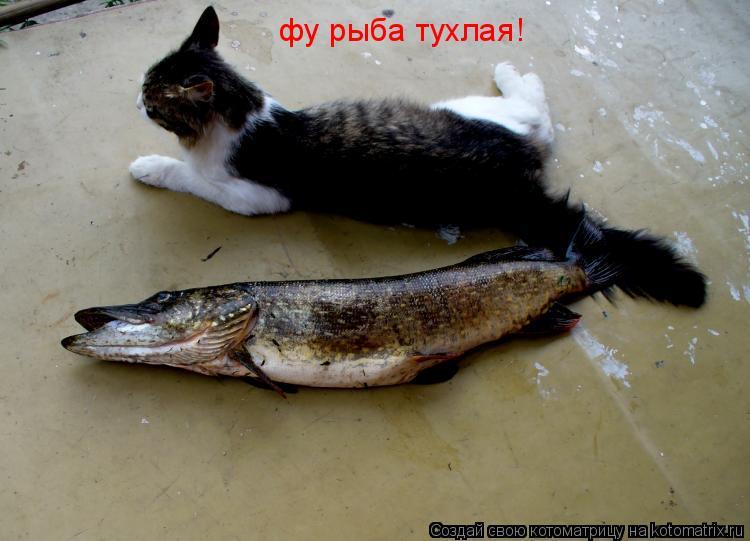 Котоматрица: фу рыба тухлая!