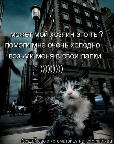 Котоматрица: может мой хозяин это ты? помоги мне очень холодно возьми меня в свои лапки )))))))))