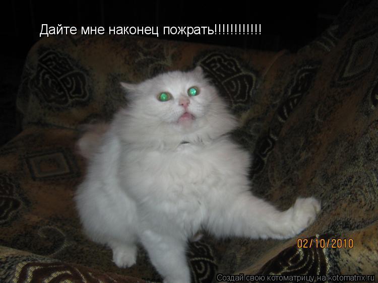 Котоматрица: Дайте мне наконец пожрать!!!!!!!!!!!!