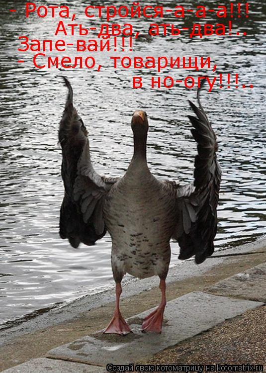 Котоматрица: - Рота, стройся-а-а-а!!!  Ать-два, ать-два!.. Запе-вай!!! - Смело, товарищи, в но-огу!!!..