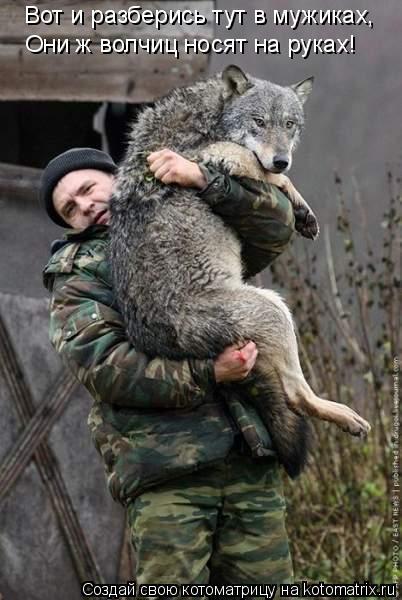 Котоматрица: Вот и разберись тут в мужиках, Они ж волчиц носят на руках!