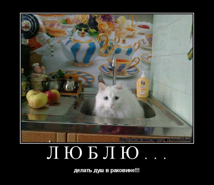 Котоматрица: люблю... делать душ в раковине!!!