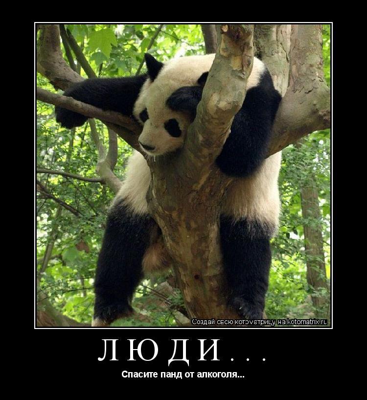 Котоматрица: Люди... Спасите панд от алкоголя...