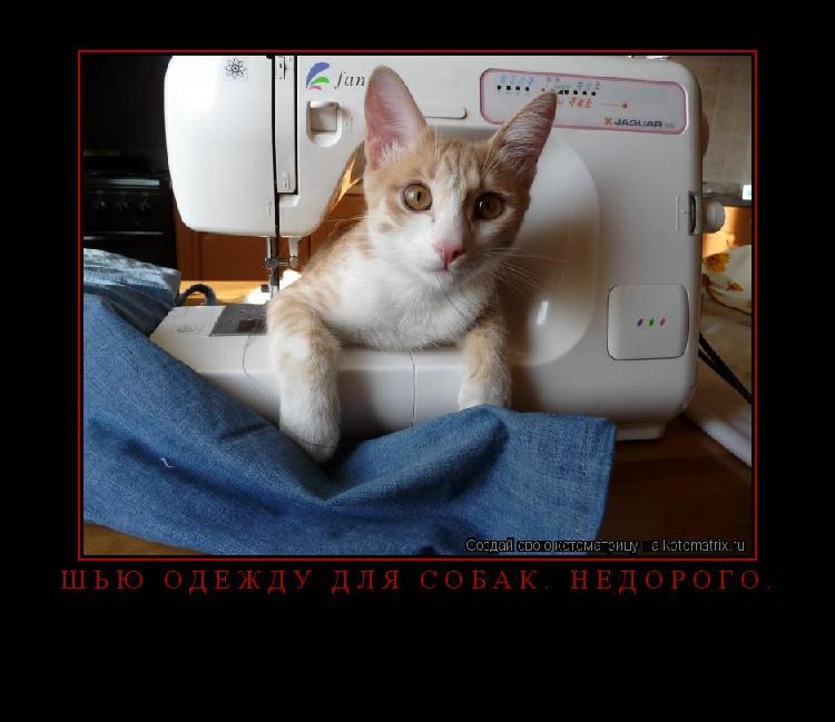 Котоматрица: Шью одежду для собак. Недорого.