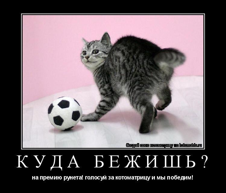 Котоматрица: куда бежишь? на премию рунета! голосуй за котоматрицу и мы победим!