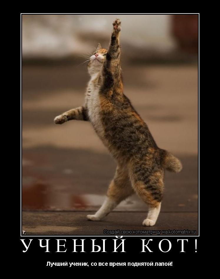 Котоматрица: Ученый кот! Лучший ученик, со все время поднятой лапой!