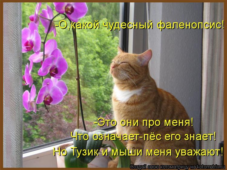 Котоматрица: -Это они про меня! -О,какой чудесный фаленопсис! Что означает-пёс его знает! Но Тузик и мыши меня уважают!